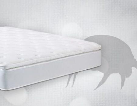 dust mites in mattress