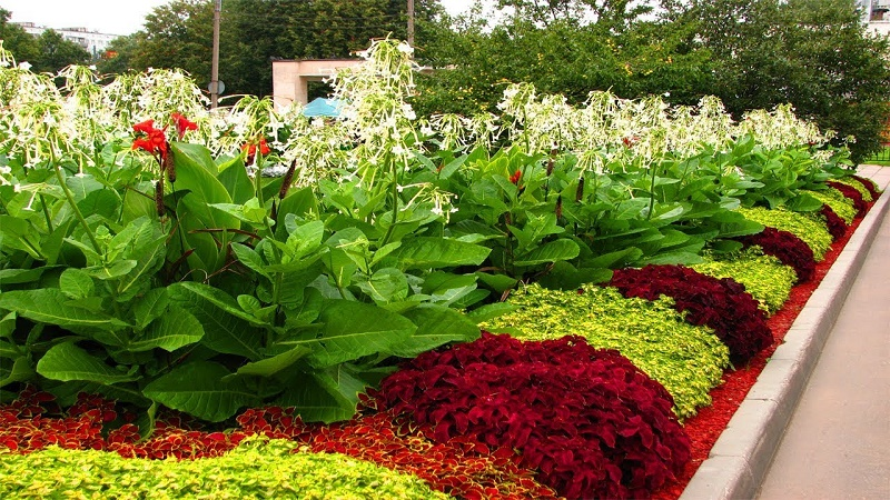 flower bed designs for front of house